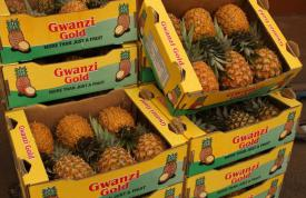 Gwanzi Queens Packhouse 5a