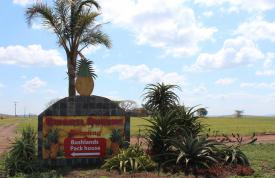 Gwanzi Queens Pineapple Farm